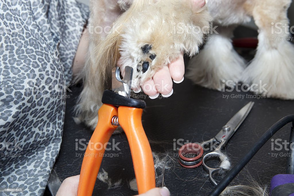 Dog grooming series royalty-free stock photo