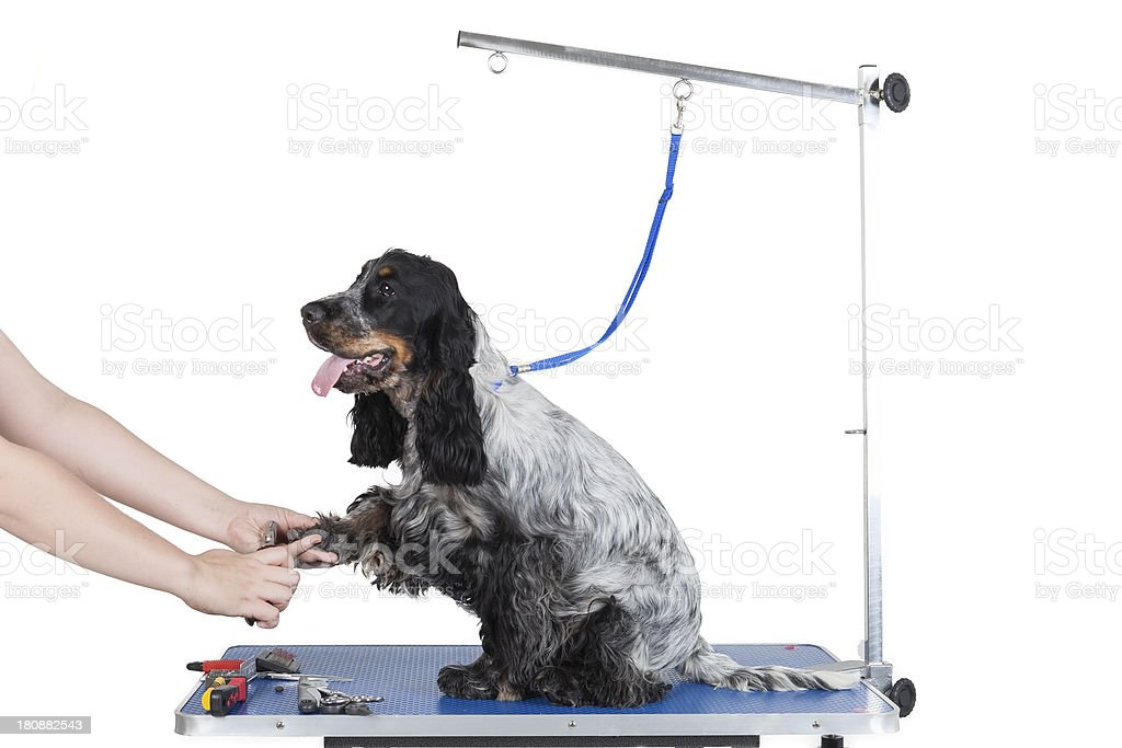 Dog grooming table stock photo