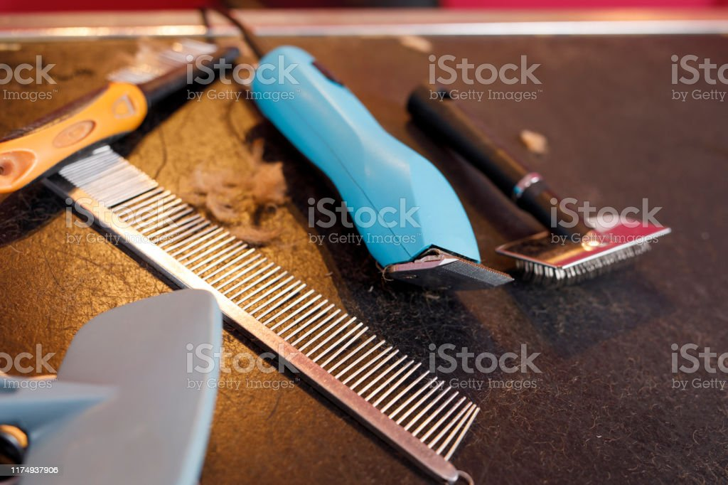 Dog Grooming Tools And Accessories Set Animal Hairdressing Tools On A Table Surrounded By Cut Fur In An Pet Saloon Stock Photo Download Image Now Istock