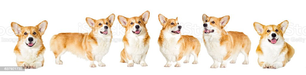 Dog group looks on a white background stock photo