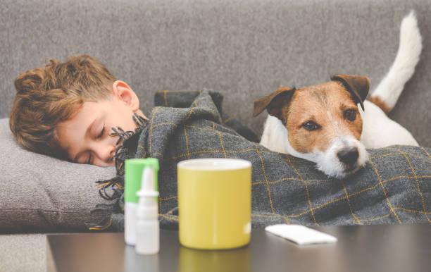 dog guarding sick boy sleeping on sofa under plaid - illness stock pictures, royalty-free photos & images