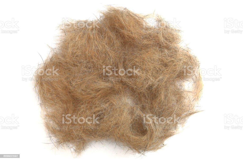 Dog hair isolated on white background stock photo
