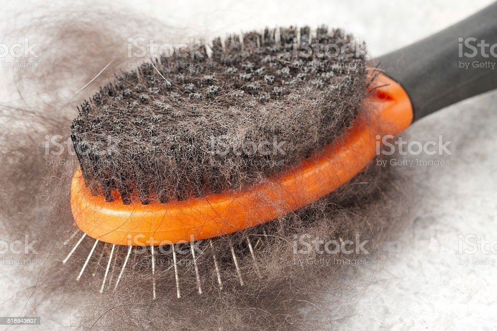 Dog Hair stock photo
