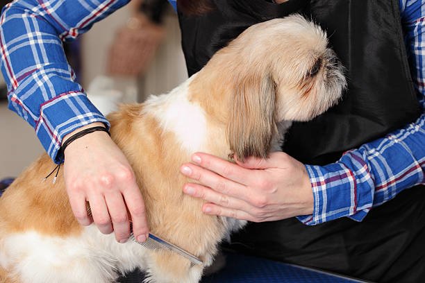 Pies Fryzjer fryzurę, spa dla psów – zdjęcie
