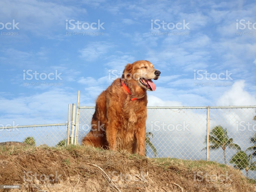 Dog hangs out on top of sand bluff stock photo