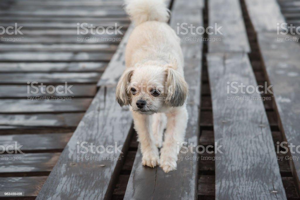 Chien heureux quand vacances voyage à pont de bois - Photo de Amour libre de droits