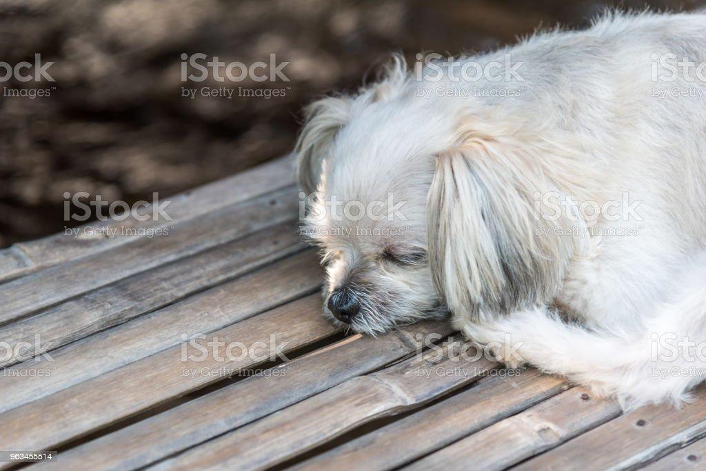 Köpek mutlu otelde tatil seyahat ahşap köprüsünde - Royalty-free Ahşap Stok görsel