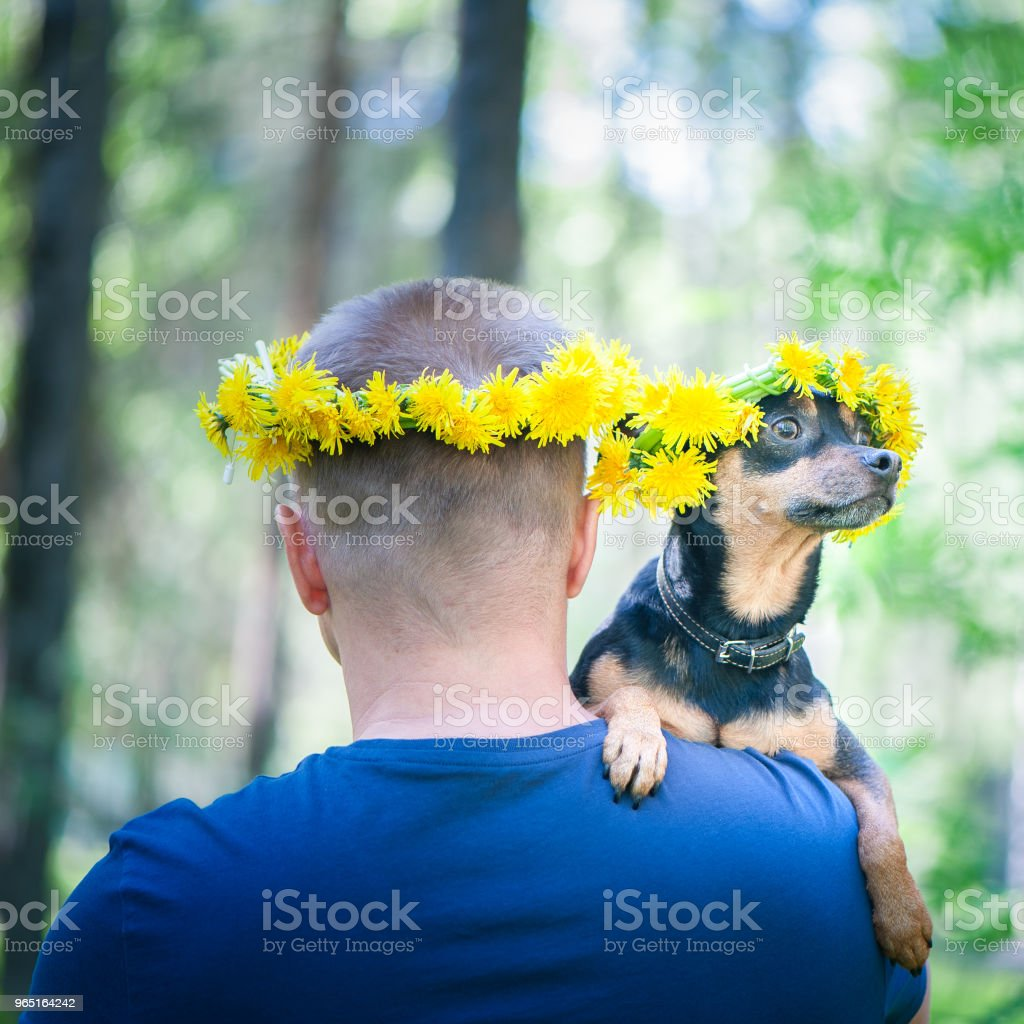 Dog has a man in his arms, they are both in wreaths of spring flowers. Symbol of friendship, spring, love royalty-free stock photo