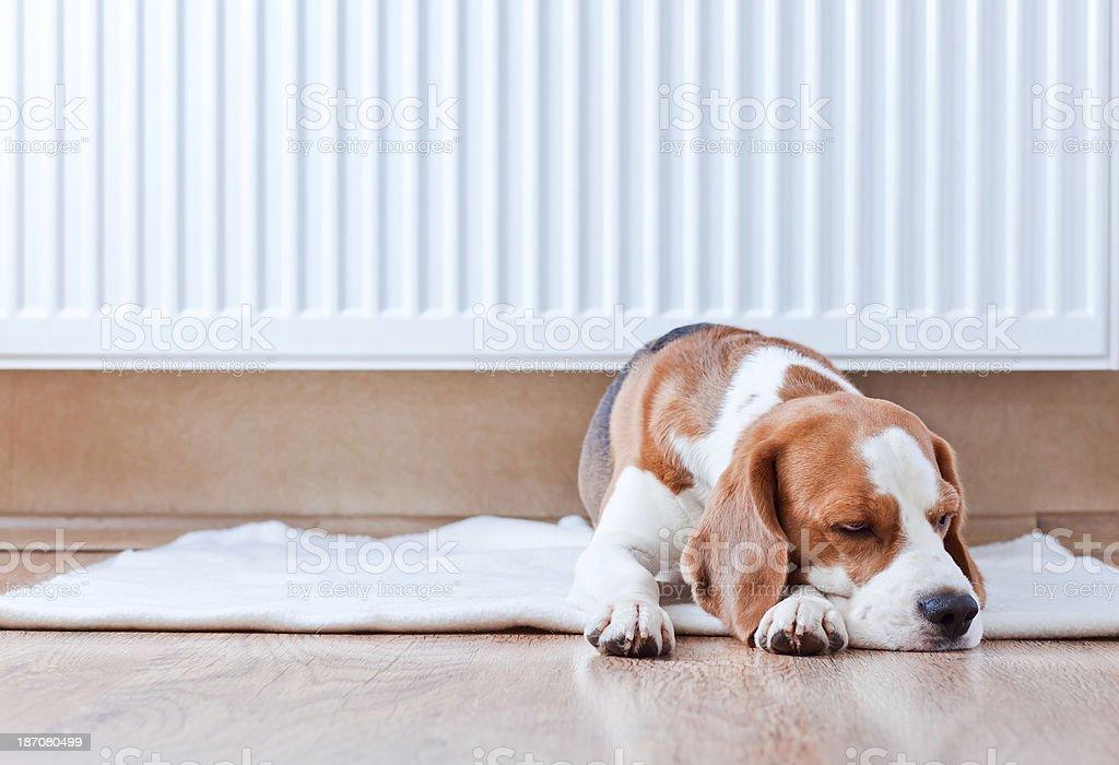 dog has a rest  near to  warm radiator stock photo