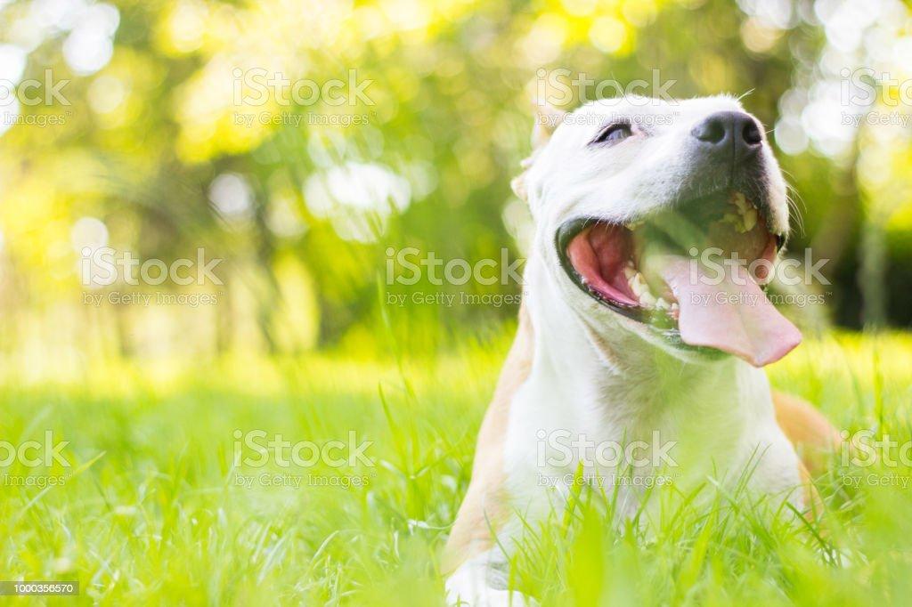 Dog having a big smile. Cute dog portrait