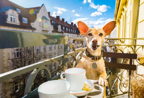 Hund eine Kaffeepause – Foto