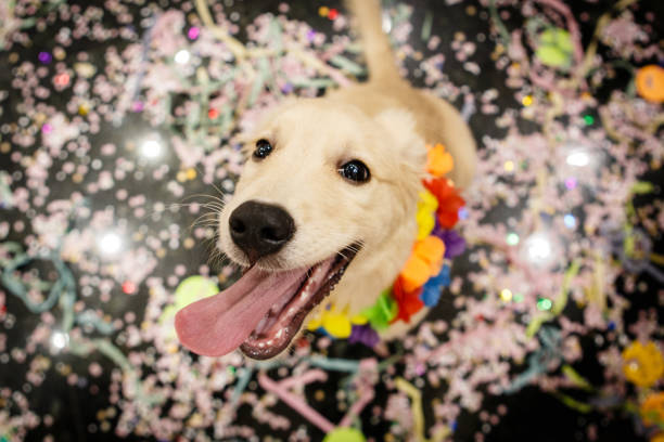 Dog having fun at Carnival stock photo