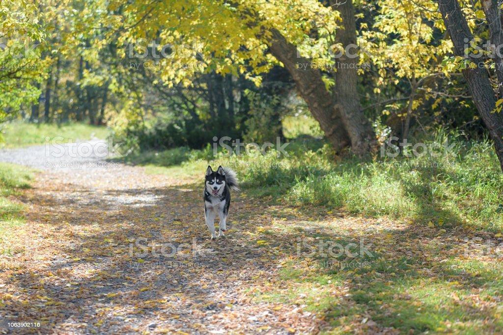 Dog having fun in a sunny dog park stock photo