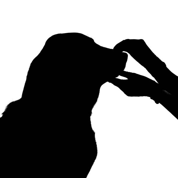 Dog head and woman hands silhouette isolated on white concept of pet picture id1163614231?b=1&k=6&m=1163614231&s=612x612&w=0&h=ae zndjj0xytvl0g6rts3fttetynt3ovncjfqoj 788=