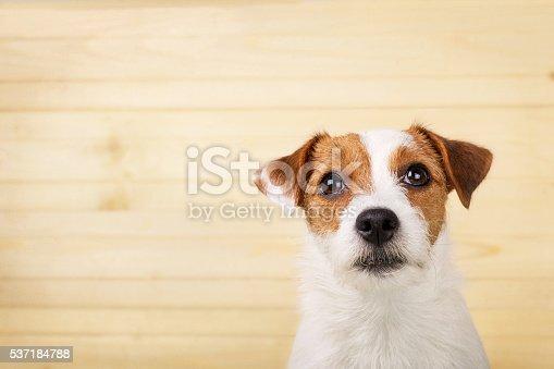 Dog headshot on a wooden background