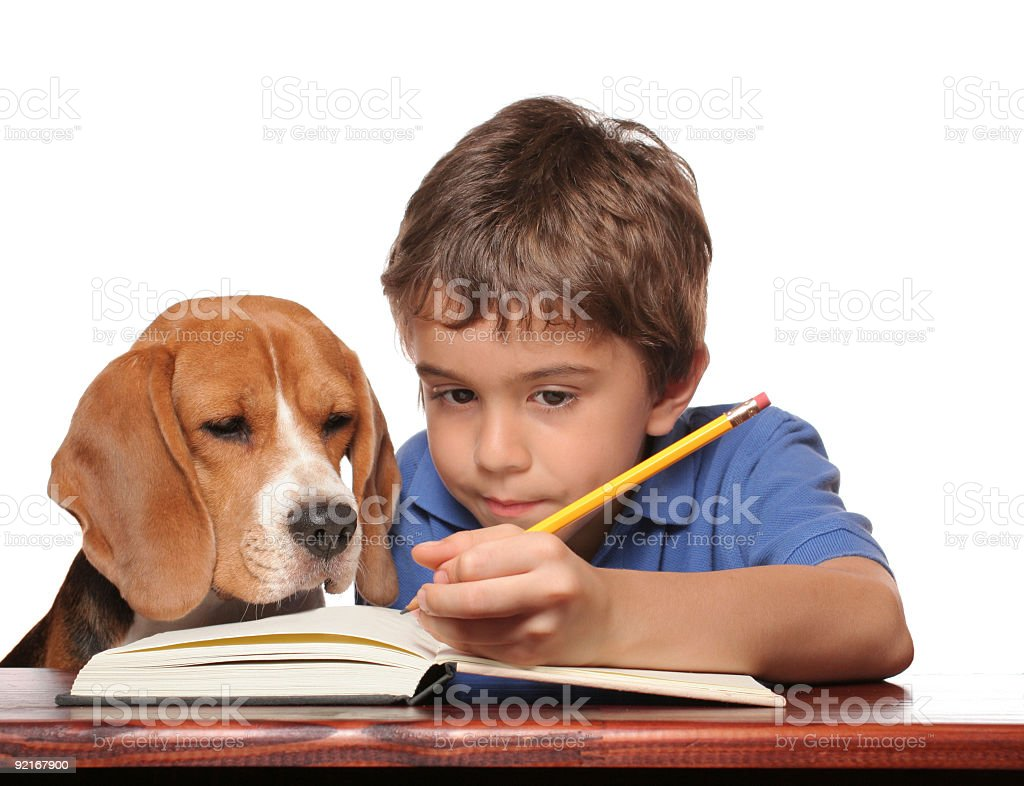 Dog helping a boy with his homework stock photo