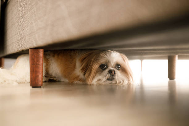 dog hiding - fear stock photos and pictures