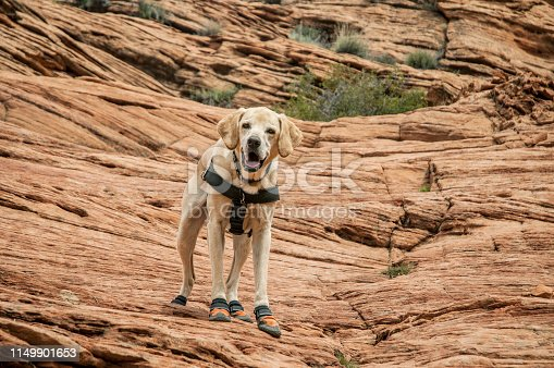 Boots are necessary for dogs when hiking in the desert. Thorns, sharp rocks, and hot sand can damage their pads.