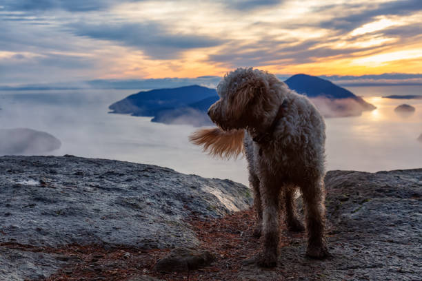 Dog Hiking in the Mountains