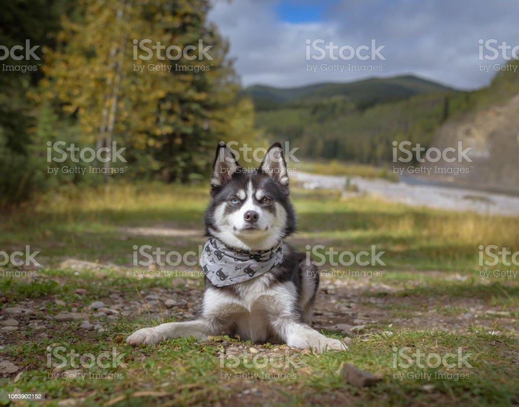 dog hiking outdoors smiling stock photo