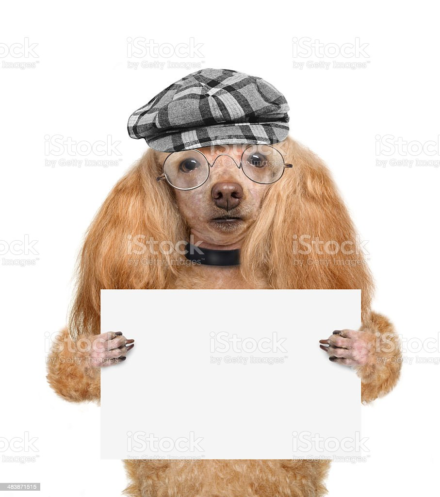 Dog holding a blank banner stock photo