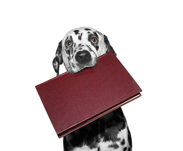 dog holding a book in his mouth stock photo