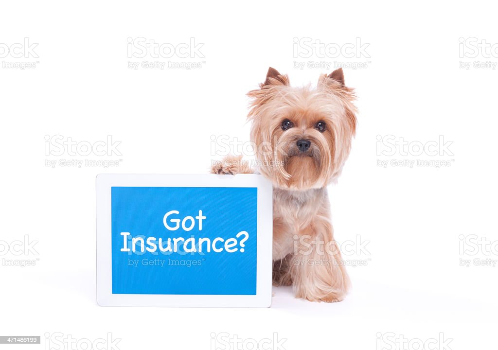 Dog Holding a Digital Computer stock photo