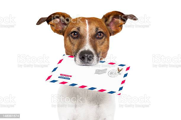 Dog holding a mail letter to the owner fast delivery picture id148361574?b=1&k=6&m=148361574&s=612x612&h=bhrghnos8uzqs8vrih8eaosj3k7vlki2uxvn6ifptqk=