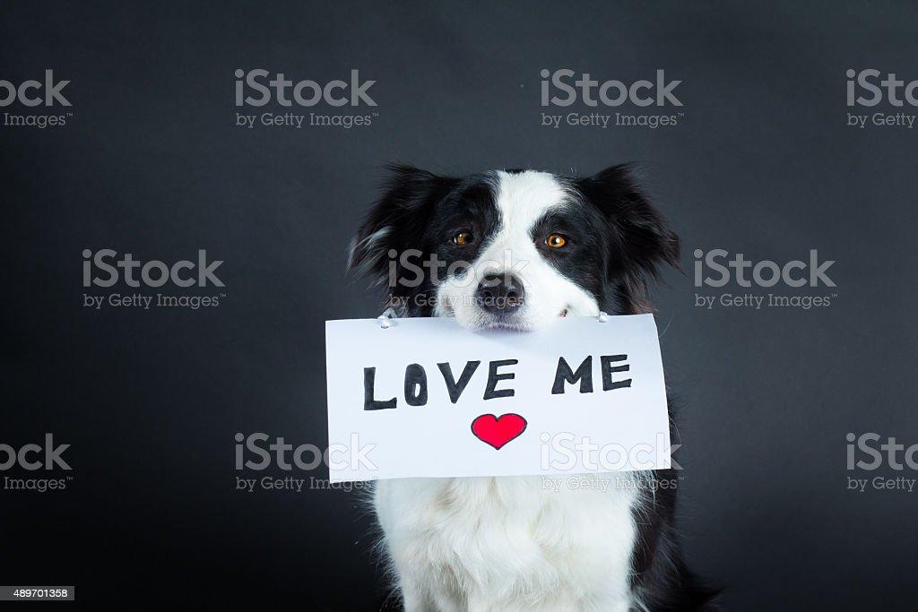 Perro sosteniendo un trozo de papel con letras - foto de stock