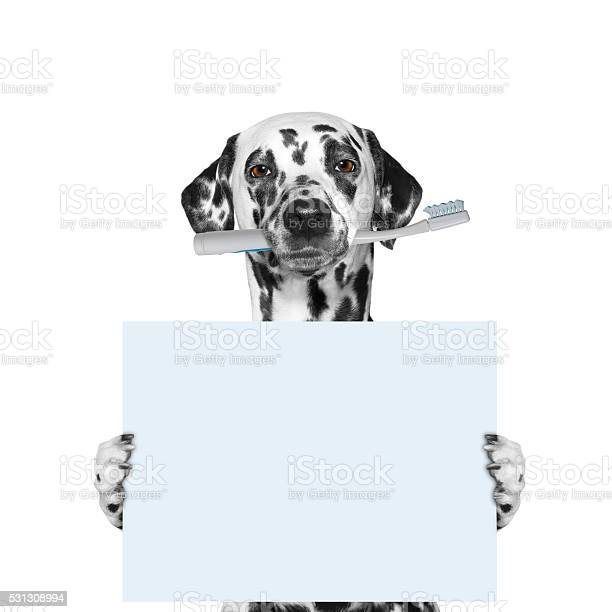 Dog holding a toothbrush and blank picture id531308994?b=1&k=6&m=531308994&s=612x612&h=qwokt11oeip1yqgfcsnh bzeuadyikzdkesog6hdovk=