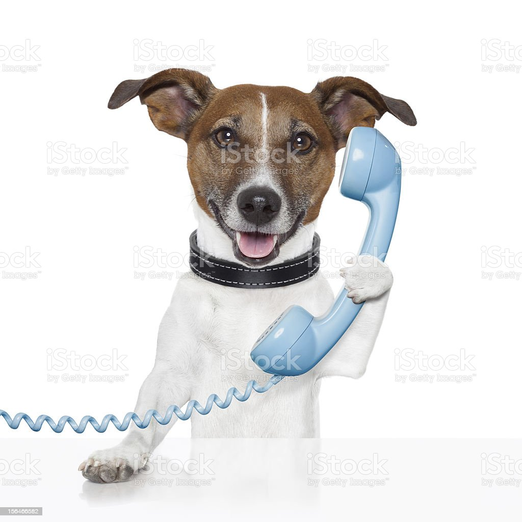 Dog holding blue phone receiver royalty-free stock photo