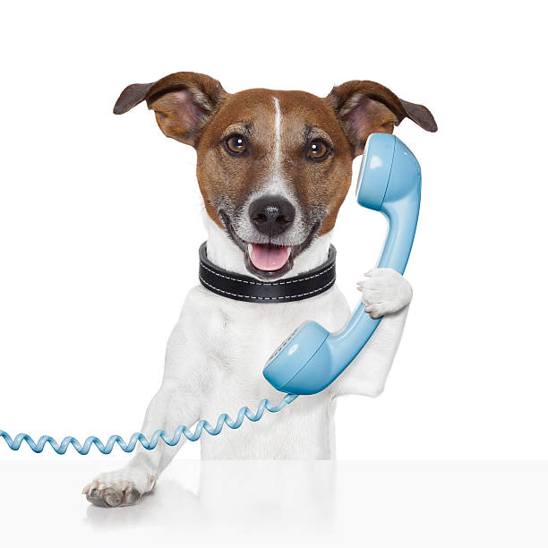 Dog holding blue phone receiver stock photo