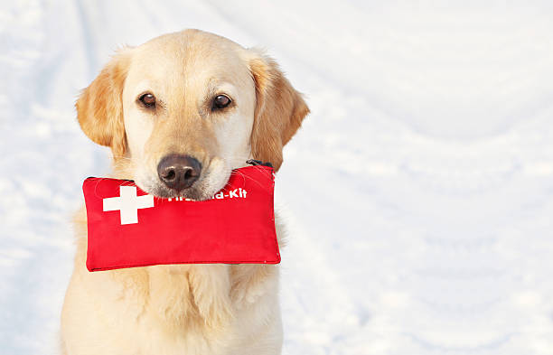 Dog holding First-Aid-Kit stock photo