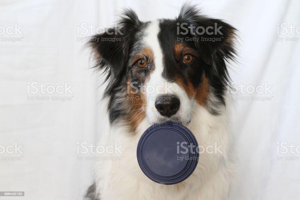Dog Holding Lid stock photo