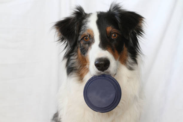 Dog Holding Lid stock photo