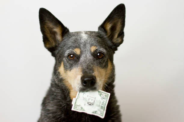 Dog Holding Money in Mouth stock photo