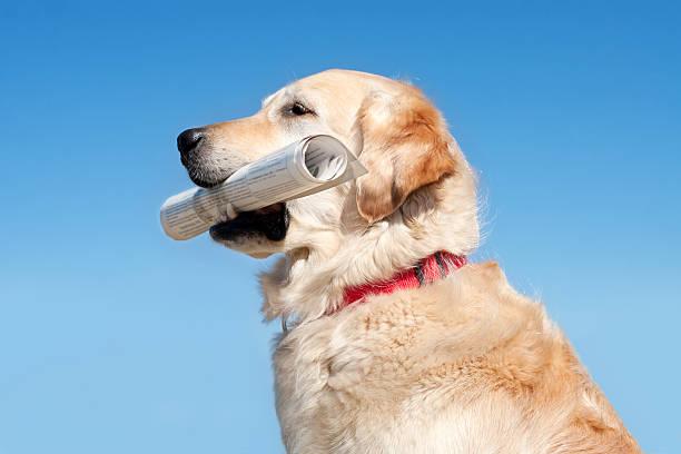 Dog holding newspaper stock photo