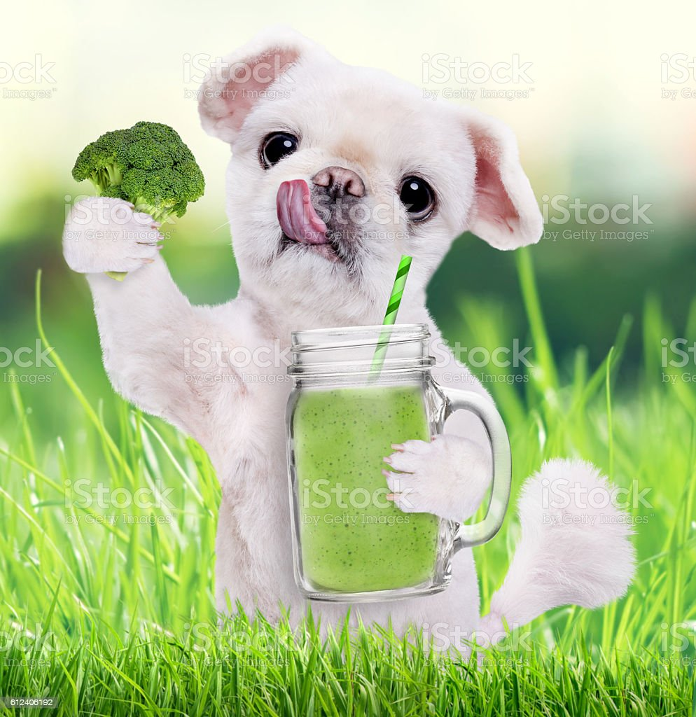 Dog holding smoothie in a mug . stock photo