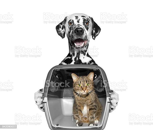 Dog holds his friend cat in container picture id542090022?b=1&k=6&m=542090022&s=612x612&h=bqzhjk5wcxizjxdvcpkakp qpy99udh1menehvdk rq=