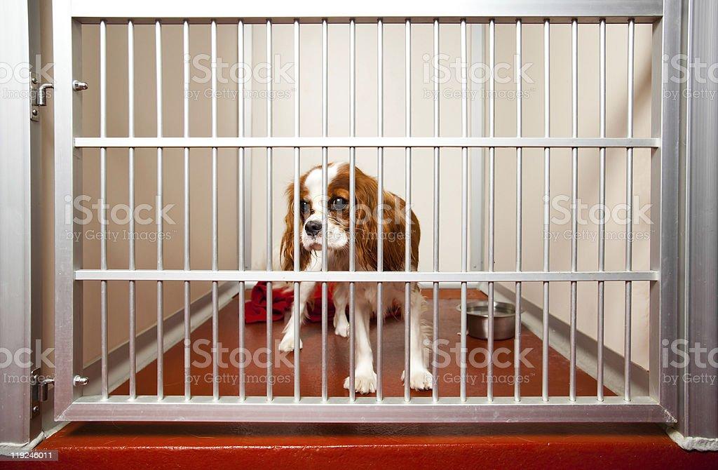 Dog Hotel stock photo