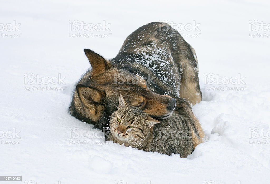 Dog hugging cat in the snow stock photo