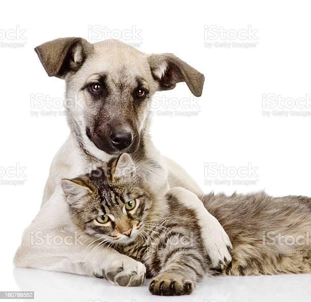 Dog hugs a cat picture id160786552?b=1&k=6&m=160786552&s=612x612&h=5r02qogtyx2mjtdphogpe2svfw7xgkpug5ewcxkfui8=