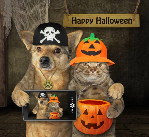 hund umarmt mit katze für halloween - hunde strumpfhosen stock-fotos und bilder