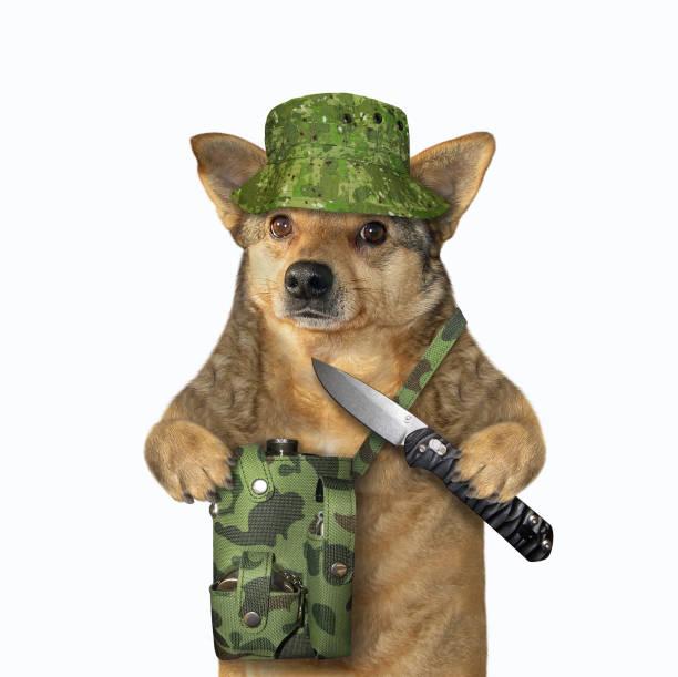 Dog hunter holds a jackknife stock photo