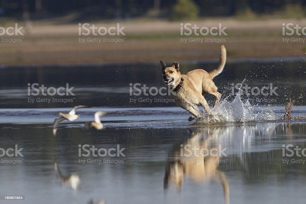 Dog hunter stock photo