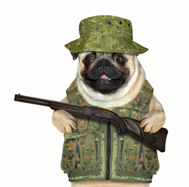 Dog hunter with a rifle stock photo