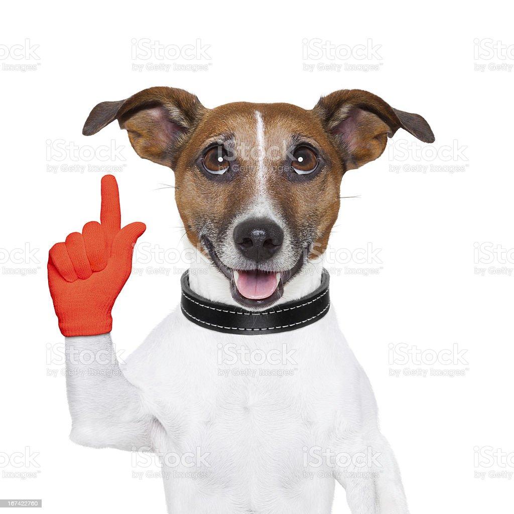 dog idea stock photo