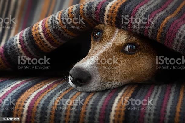 Dog ill or sleeping picture id501294998?b=1&k=6&m=501294998&s=612x612&h=qurhgienwekpvz7bf1gr9buyldmkuwne8yy8f6zjgs4=