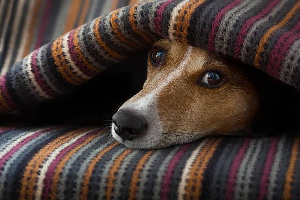 Dog ill or sleeping picture id501294998?b=1&k=6&m=501294998&s=612x612&w=0&h=g71qsdogpi7z7ok0 bexoj1f3wyqysix42l o4jompe=