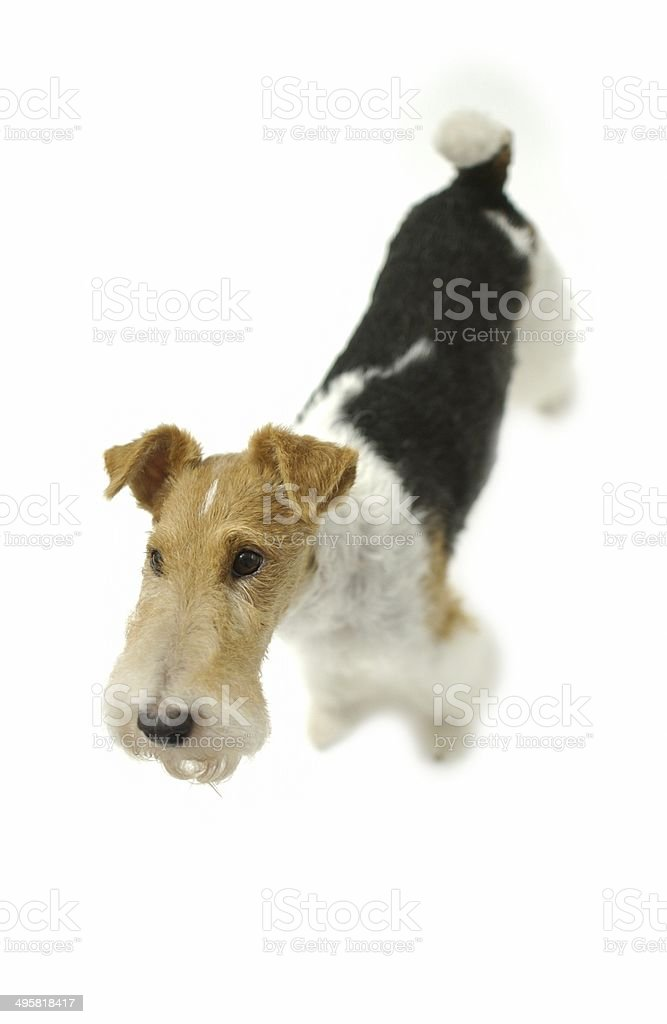 Dog image stock photo